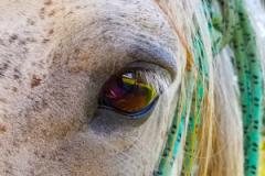 8-WATCHFUL-HORSE-EYE
